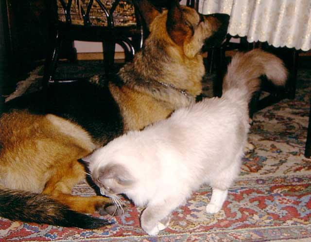 9 Natascha_und_Hund