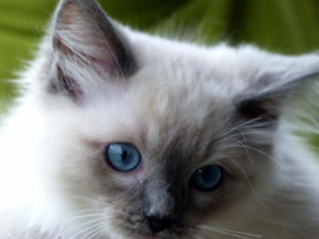 Cassandra-blue-mitted1