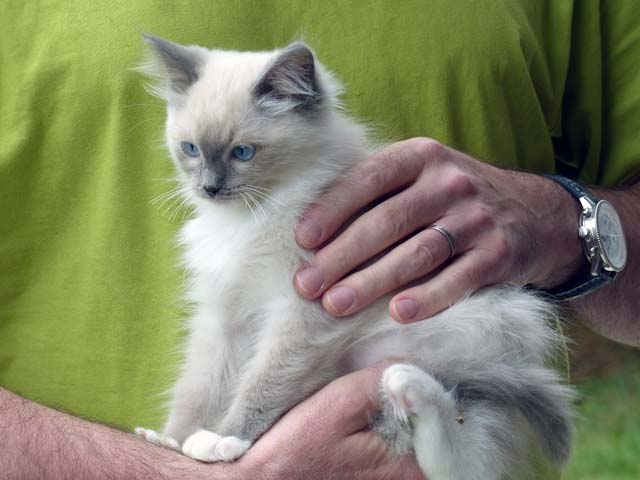 Cassandra-blue-mitted2