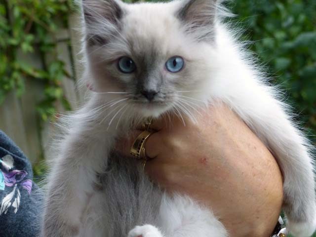 Cassandra-blue-mitted3