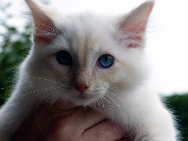 Clark-Gable_creme-mitted1