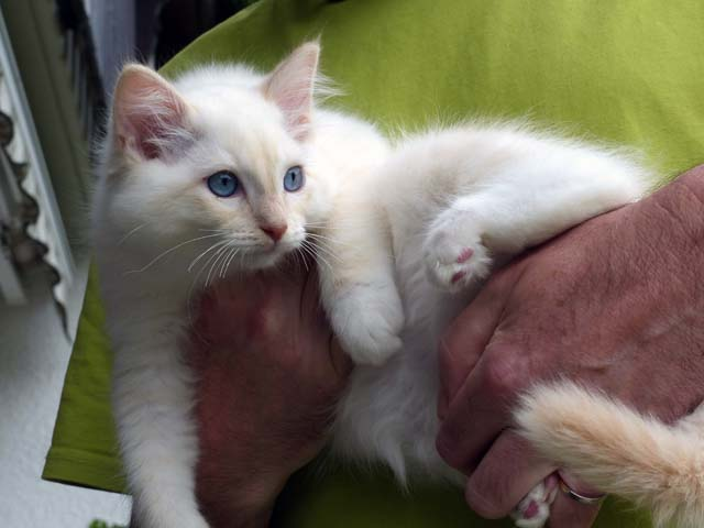 Clark-Gable_creme-mitted2