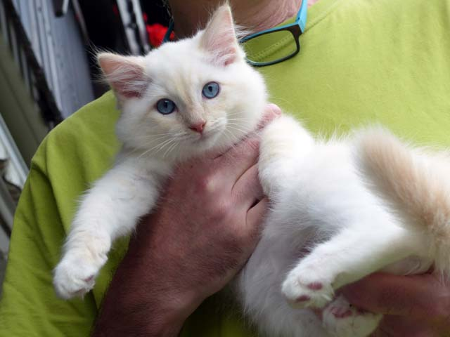 Clark-Gable_creme-mitted3